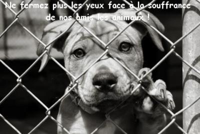 Ne fermez plus les yeux face à la souffrance de nos amis les animaux !