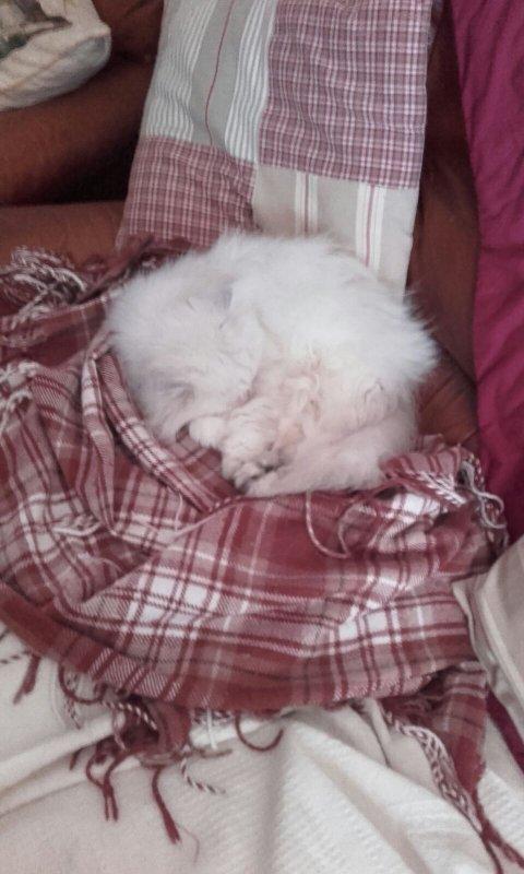 mes petits chats on froid   , les uns ont trouvé des coussins quant à ma petite persane  une couverture