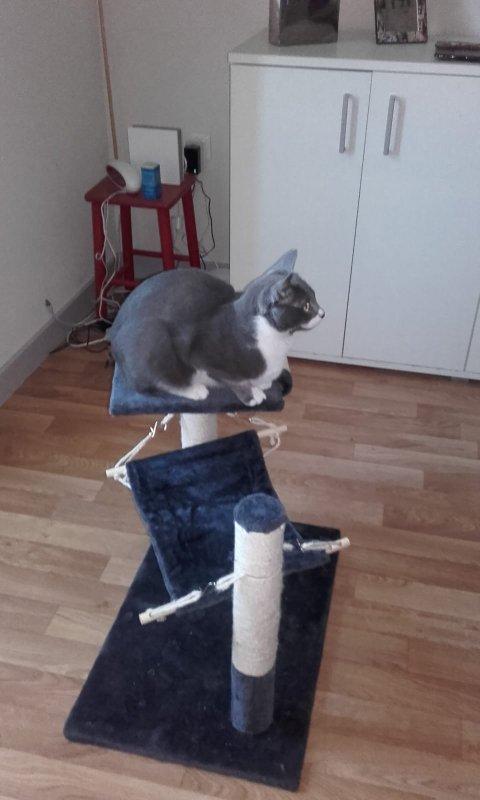 le chat de ma fille un sacré coquin