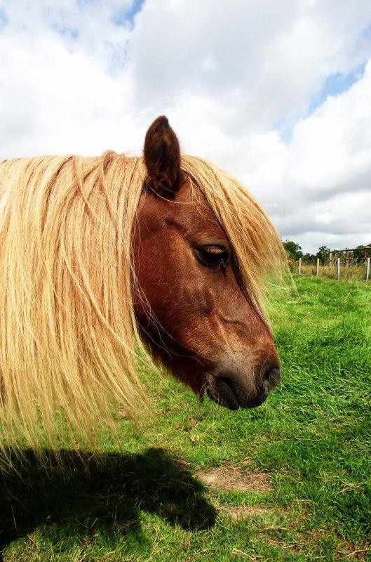 """""""On s'accorde à dire la beauté singulière d'un cavalier et sa monture. Cette image conjugue la grâce, l'élégance, la race qui lui donne sa haute noblesse."""""""