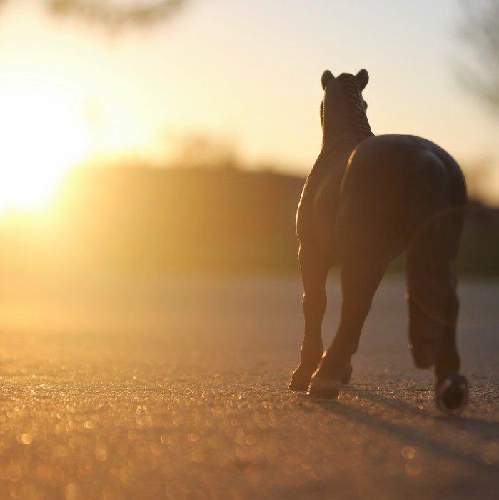 Blog de unma horse
