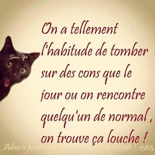 Le poêmes du chat noire