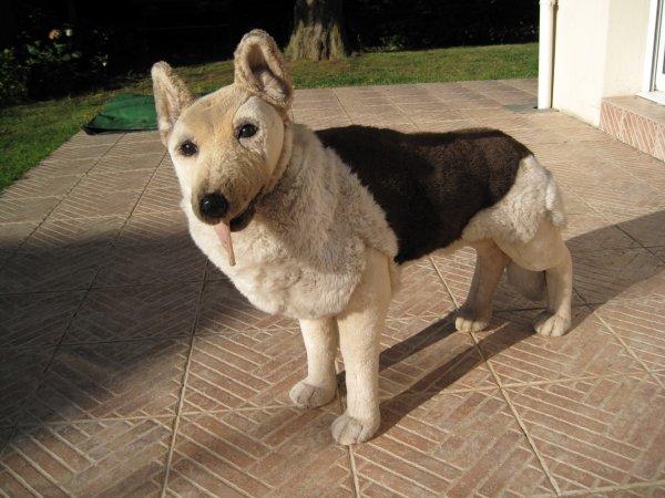 un troisieme chien à la maison super sage propre discret un peu trop une grosse peluche qui fout la trouille à chipie et pep's (pour les nouvelles venues sur mon blog ce sont mes deux chiennes en chair et os et tendresse )                                                                                                 es