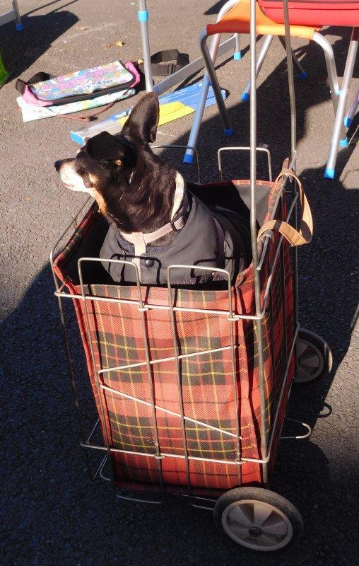 ma photo préférée..ce vieux chien presque aveugle que sa maitresse promène dans cette charrette qui d'après ces dires prend moins de place lui il s'en fiche du moment qu'il se balade ...bonne fin de semaine à toutes