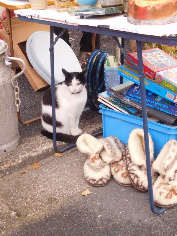 et un minou qui a trouvé refuge sous la table du stand en face de sa maison pas bête !!!