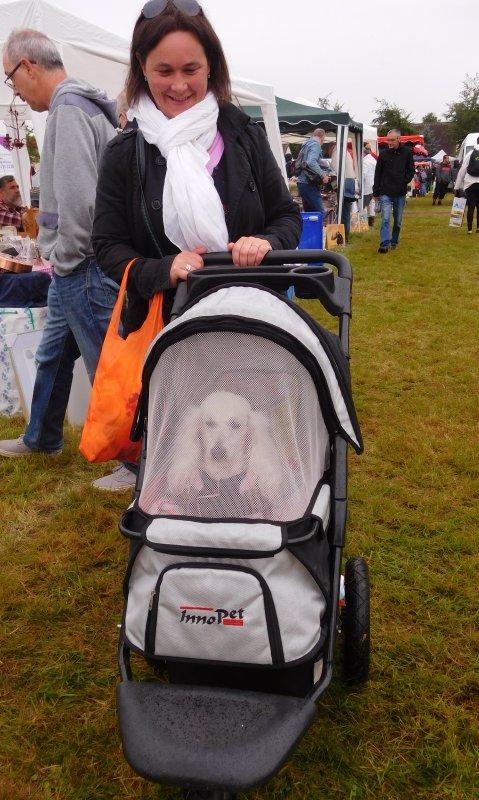 le chien rencontré en brocante dans sa poussette spéciale de luxe sur trois grandes roues pour ce caniche blanc ...bonne fin de semaine à toutes  !!