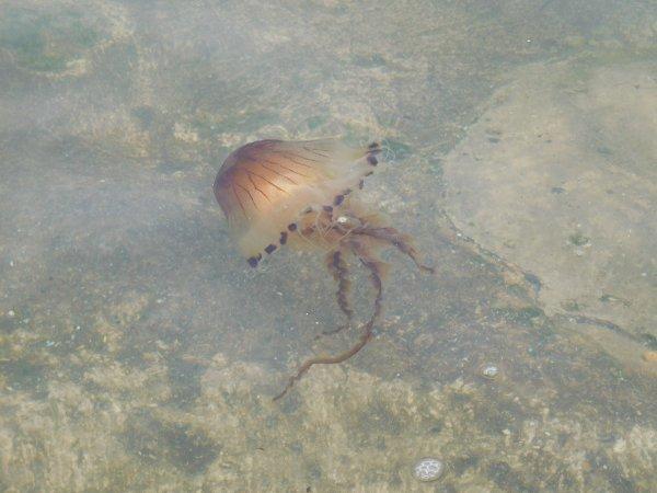 hier avec la chaleur beaucoup de méduses à la mise à l'eau dans le port pas engageant du tout du tout !!