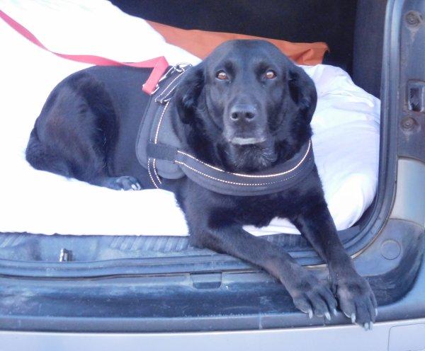 cet été indien est bon pour tous, ma pep's peut encore en profiter un vrai plaisir pour ce chien d'eau,  à l'arrêt je laisse le coffre ouvert elle n'aime pas la voiture   ...bonne fin de semaine à toutes !!