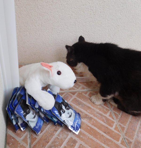 Monsieur Minou a reçu un cadeau de Claudine qu'il a goûté de suite et apprécié par contre il regarde avec retenu ta peluche chat il est encore très méfiant ...merci beaucoup pour ton envoi gros bisous