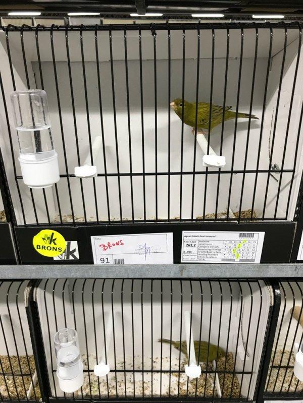 Oiseaux à céder