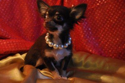 voici notre princesse milka