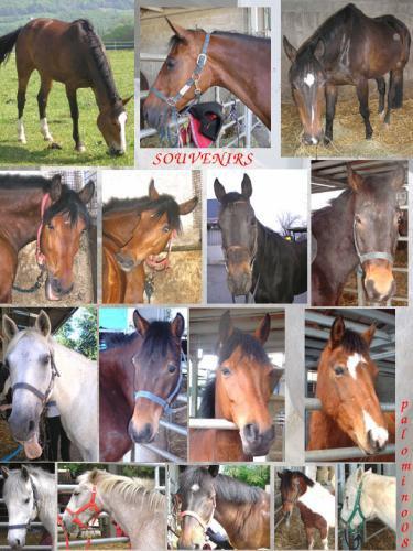 En souvenir de tous les poneys et chevaux qui sont passés par le club