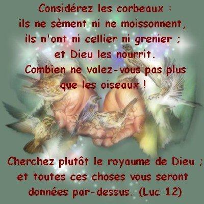 Luc 12:24