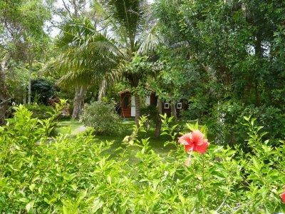 Une partie du jardin avec sa toute petite cabane hum hum s jour en nouvelle cal donie - Cabane jardin ikea saint etienne ...
