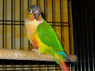 Voici Paco ... le chéri de Lilou