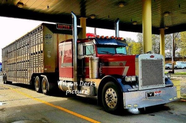 Peterbilt 379 Idaho Cattle truck at Jubitz truckstop Portland Oregon USA