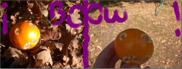 SECOND CONCOURS SPECIAL HALOWEEN!! :D