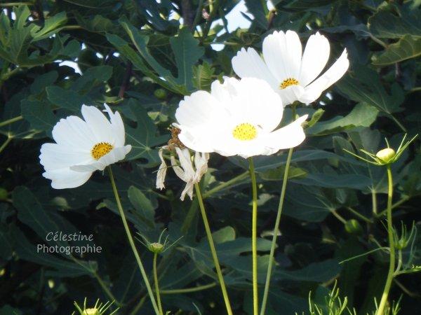 Une fleur ouvertr vaut mieux qu'une fleur fannée.