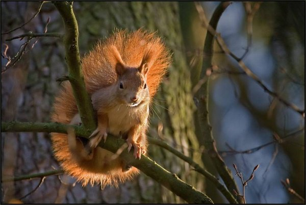 sauver les écureuils