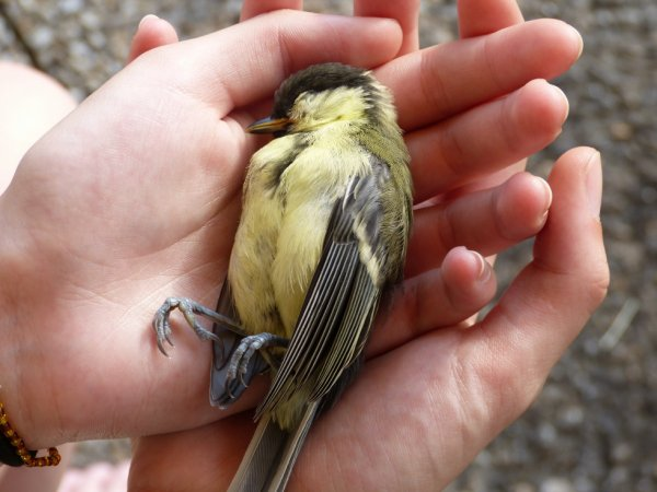 Poor, poor little tit ...