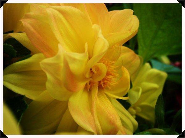 Une fleur de près...