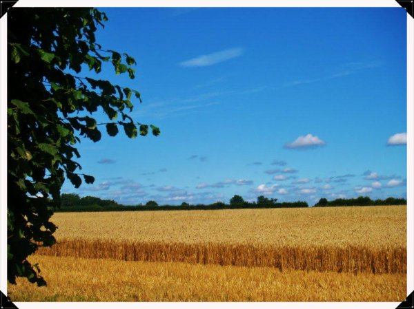Un champs étandu...