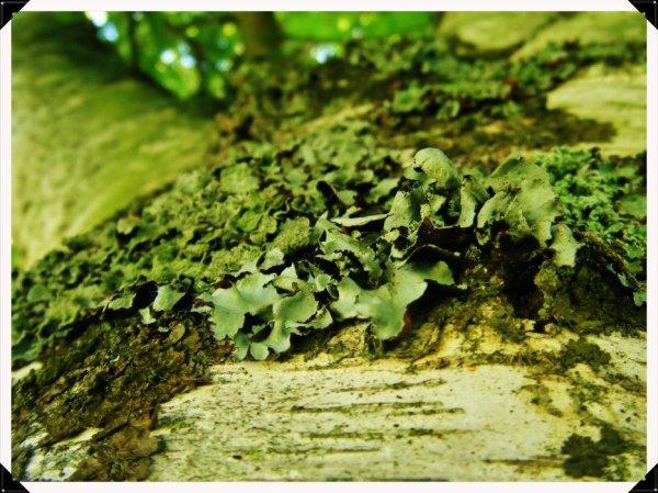 L'écorce d'un arbre...