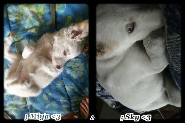 # Quatre Février Deux Mille Treize ♥ Miya & Sky ♥ -