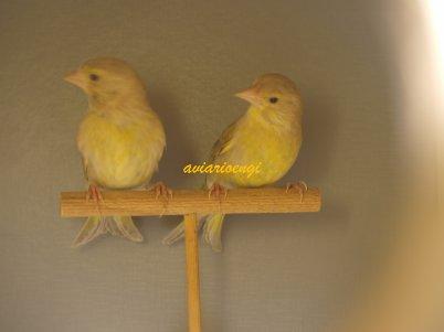reproductores verderones mutados año 2012