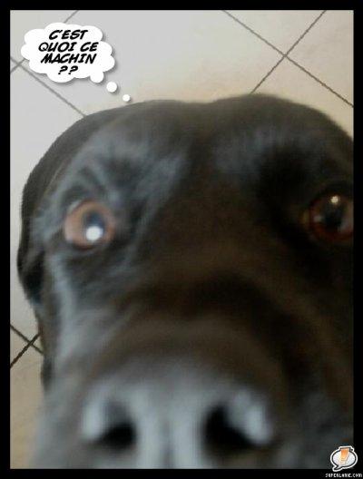 Ma chienne Lola