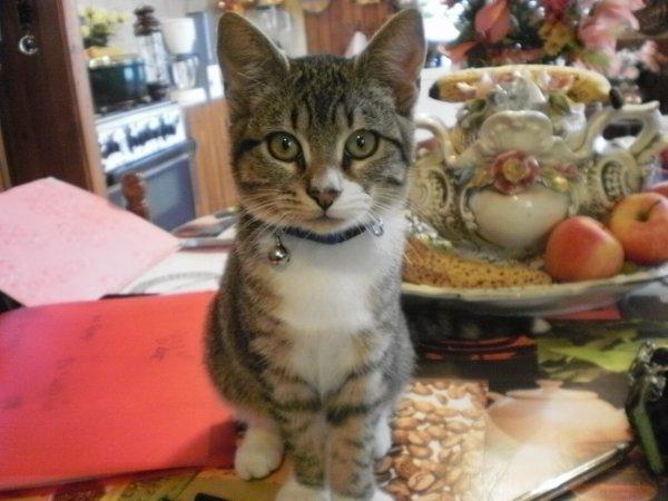 moi et mon chat filou dans ma cuisine trop beau je ladore trop