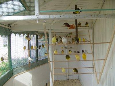 voila tout se petit monde a plume .j espere avoir de beau petit canaries pour 2011 . cette annèe quelque mèlange de couleur