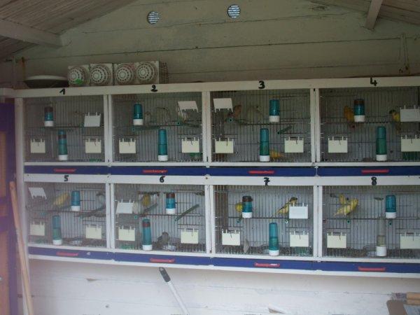 8 couples en cages plusieurs couleur j ai mis les nids