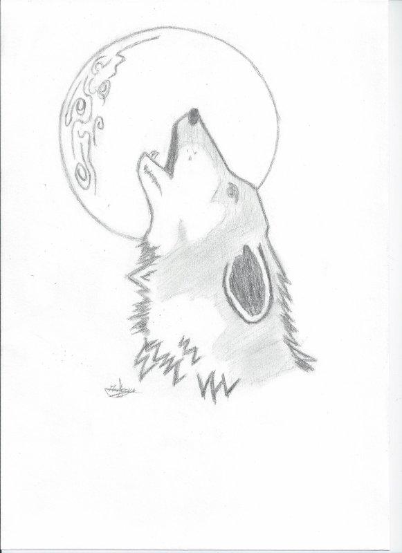Loup 'ébauche'