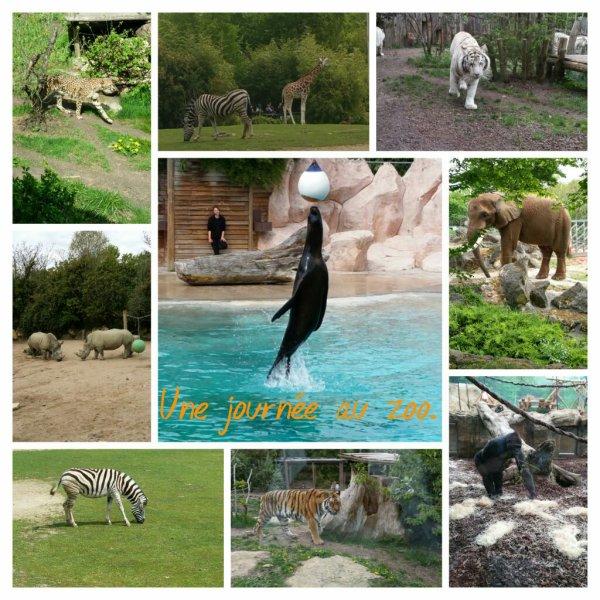 Une journée au zoo.