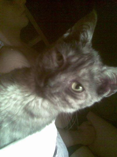 Mon nouveau petit chat