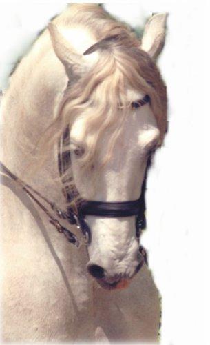 plein de ph0t0 de chevaux