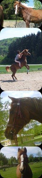Un Petit Cheval avec un Coeur Gros Comme ça ! <3