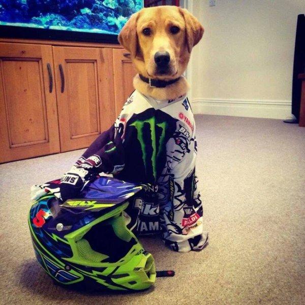 Voici mon chien xD
