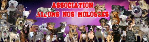 SITE DE L'ASSOCIATION AIDONS NOS MOLOSSES