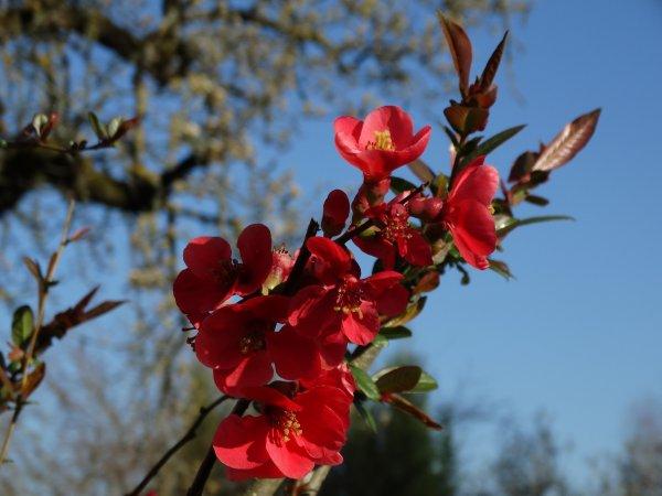 les fleurs de printemps dans la nature