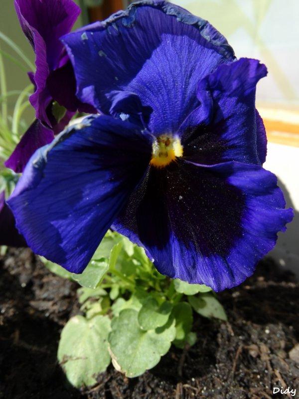 les fleurs de mon jardin au printemps