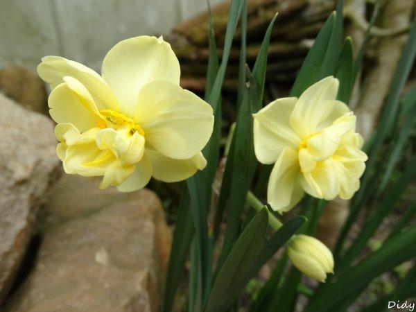 30 mars 2014 dans mon jardin