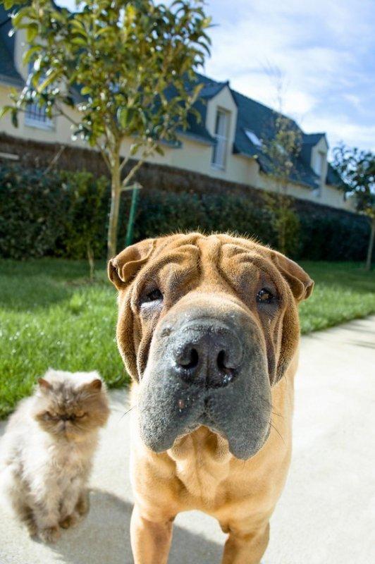 chien et chat avec de droles de tetes