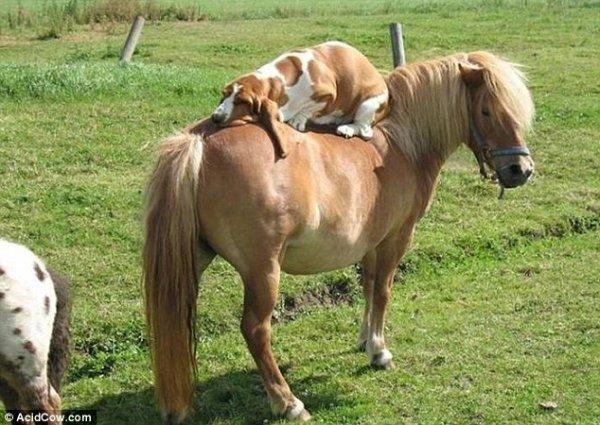 chien et poney !