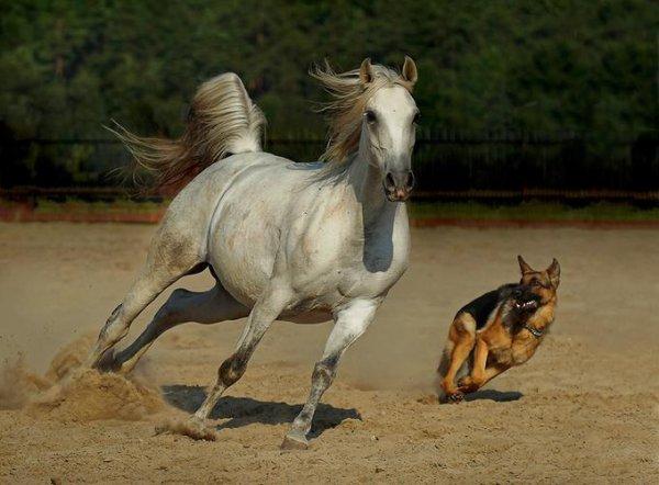 chien et cheval