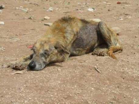 « les Animaux de bled » d'Agadir/Maroc : Annie nous raconte !