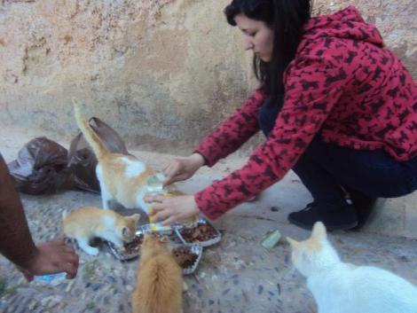 Un  clique pour venir en Aide a notre Amie Hajar de Rabat / Maroc