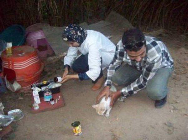 Maroc / Rabat:un vétérinaire au grand coeur .....