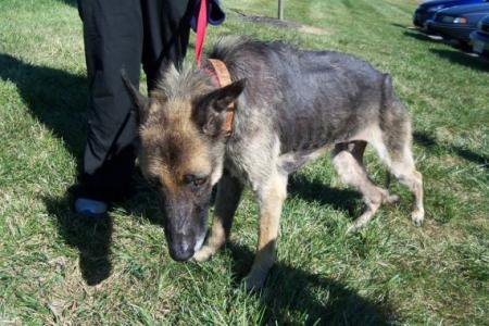 Ce chien est resté quatre ans enchaîné à un arbre